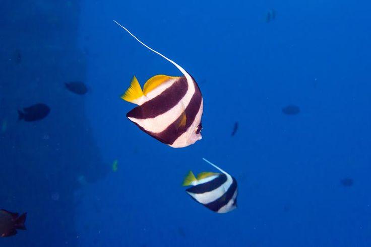 Le più belle barriere coralline del mondo, ecco i migliori posti per immersioni e snorkeling   WePlaya