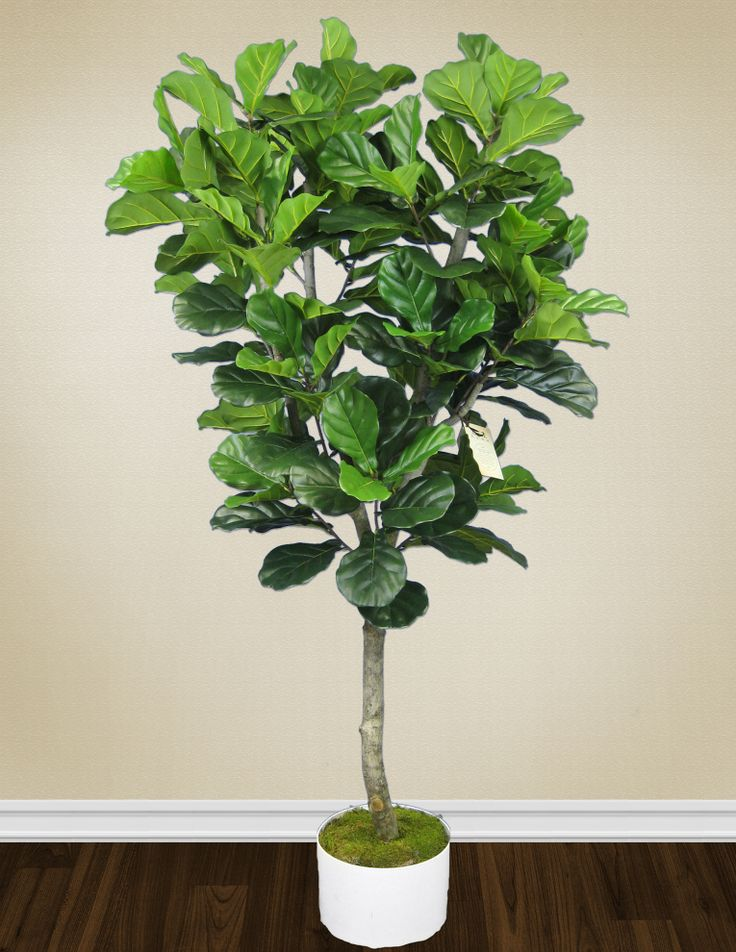26 best custom silk trees images on pinterest silk tree palm fiddle leaf tree hand crafted by aldik homes experienced tree makers visit mightylinksfo