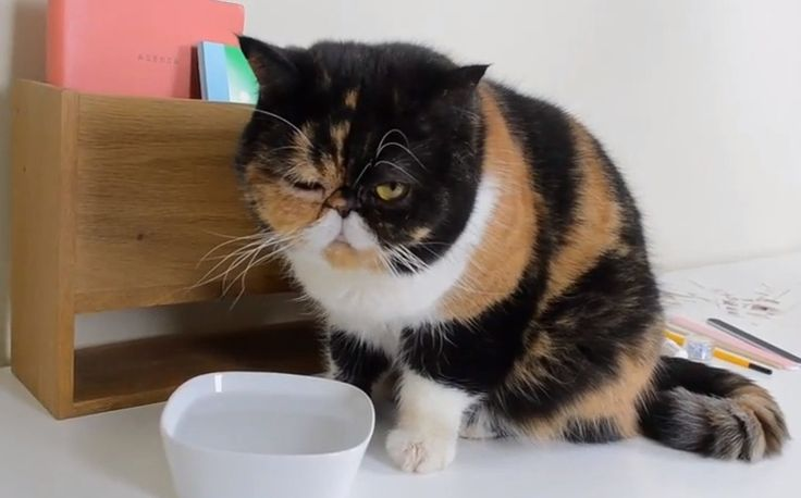 Pudge The Cat Has A New DIY Series On YouTube