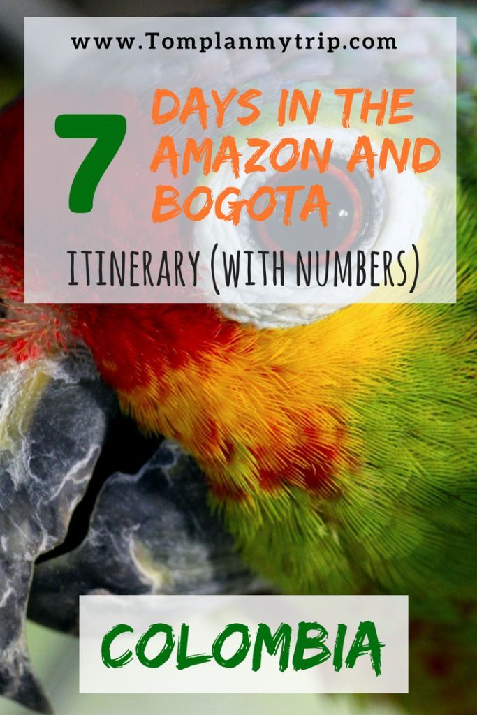I wrote a three weeks Itinerary in Colombia for a Social Travel. Travel with us to the Amazon (Laeticia and Puerto Narino) and found out the best activities you can do by yourself. Then spend a last crazy night in the Capital of Colombia, Bogota!