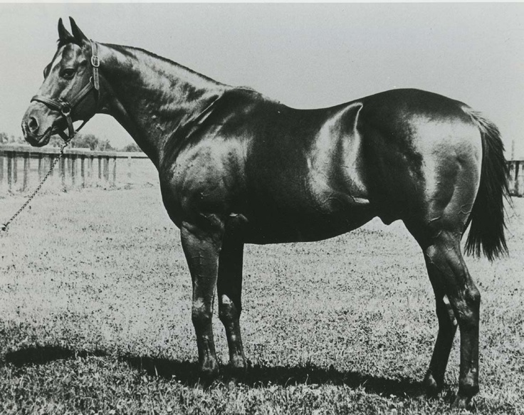 """Rocket Bar was the type of horse upon which accolades are hung. Sports writers began calling him the """"Wonder Horse"""". He was inducted into the Hall of Fame in 1992. Learn more about the AQHA Hall of Fame inductees at http://aqha.com/Foundation/Museum/Hall-of-Fame/Hall-of-Fame-Inductees.aspx ."""