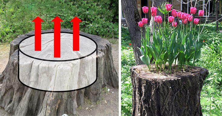 12+ Old Tree Stumps Turned Into Beautiful Flower Planters | Bored Panda