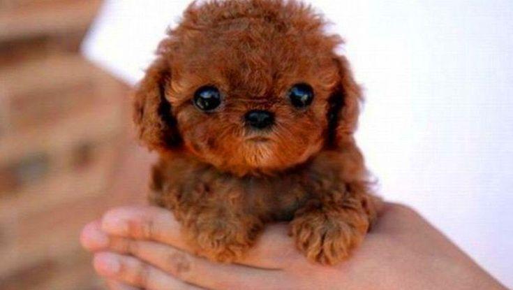 Χαριτωμένα Κουτάβια Σκυλιά Κατάρτιση 2015 - Βίντεο Σκύλο 2015 - 720P