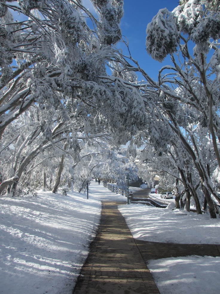 Australian bush Winter. Many people forget that an Australian winter falls from June to August and snow is usually found in the Snowy Mountains area between the states of New South Wales and Victoria and in the highlands of Tasmania.