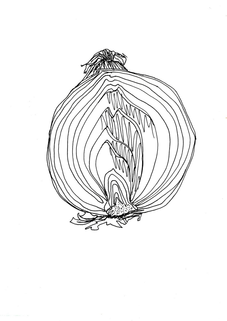 Detailed observation: onion in pen and ink