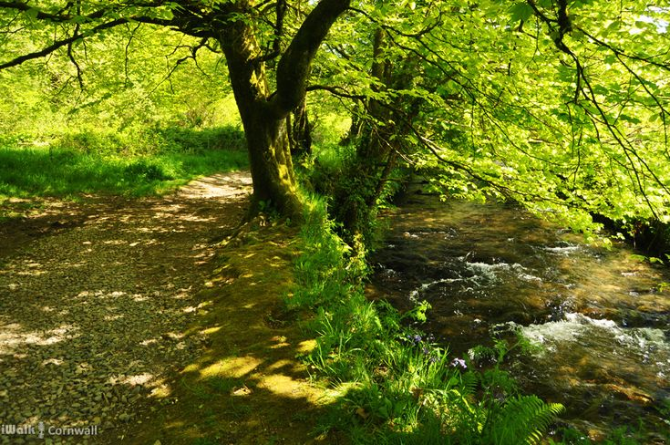 Path along the River Camel, Camelford, Cornwall