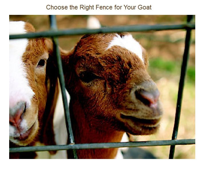 Choosing the right fencing for Goats. (from TSC). Welded Wire Sheep/Goat Panels are a great choice for strength & durability, and are IDEAL for the Buck pen.