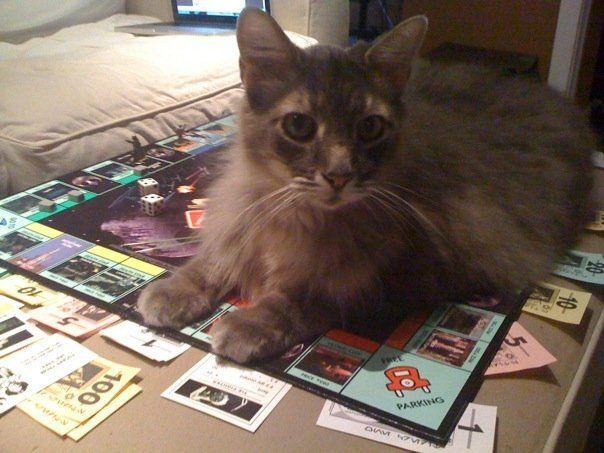 259 Best Images About Catz On Pinterest