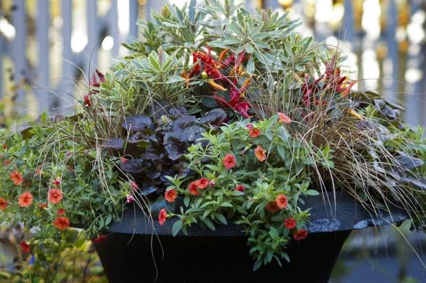 17 best images about gardening container on pinterest container gardening planters and - P allen smith container gardens ...