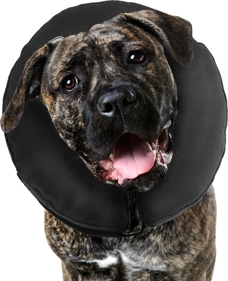 ZenPet ProCollar Pet E-Collar for Dogs and Cats - Comfortable Recovery Collar is Inflatable and Does Not Block Vision Black XX-Large