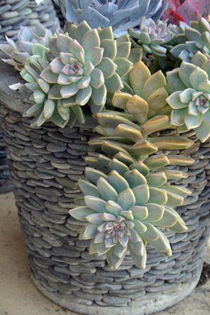 Great pot: Container Gardens, Stones Succulents, Succulents Container, Succulents Can, Rivers Rocks, Stones Planters, Gardens Succulents, Pebble Pots, Stones Pots