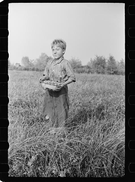 Child labor, cranberry bog, Burlington County, New Jersey -- Oct 1938 -- Part of: Farm Security Administration - Office of War Information Photograph Collection (Library of Congress)