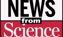 From James Taylor to Taylor Swift: Music evolves like biological organisms | Science/AAAS | News