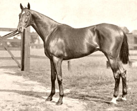 Isinglass (1890-1911) - won the English Triple Crown, was undefeated his last two racing seasons & was 1912's Leading Broodmare Sire in England & Ireland. Sired Irish-bred 5x Leading Sire AND Broodmare Sire, Star Shoot, who fathered 1919 Triple Crown winner, Sir Barton.  Isinglass blood comes through Citation's dam, Hydroplane, a mare from Britain's greatest: Hyperion, Gainsborough, St. Simon, Galopin, as well as from Brushup, dam of the legendary War Admiral.