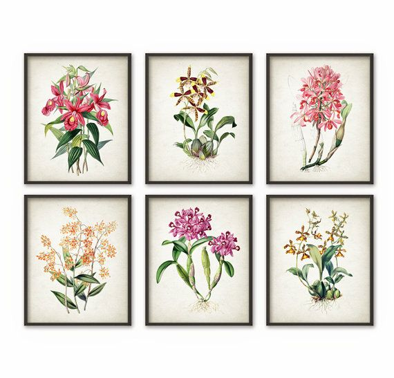 Orchid Flower Print Set of 6  Vintage Orchid by QuantumPrints