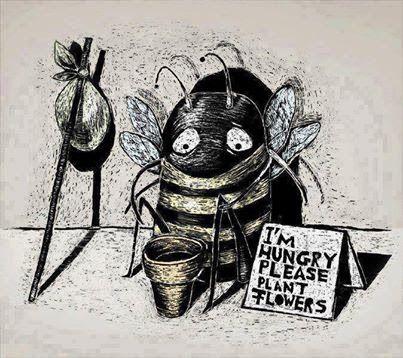 fleur abeille déclin plante