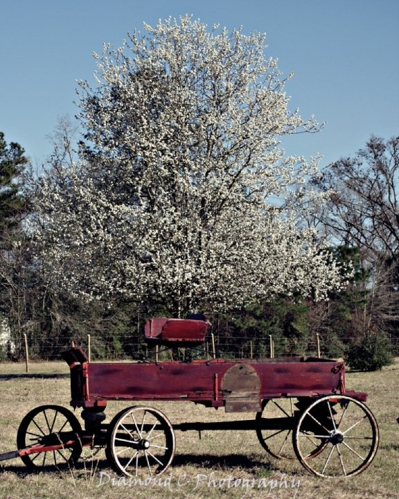 Old Wagon in spring