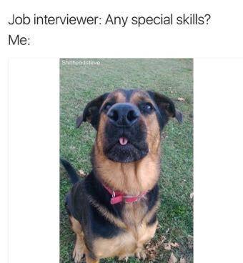 doggo funny pics, funny gifs, funny videos, funny memes, funny jokes. LOL Pics app is for iOS, Android, iPhone, iPod, iPad, Tablet
