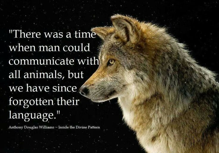 Animals, Like Animals