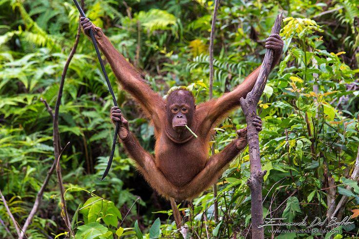 emanueledelbufalo.com portfolio animals