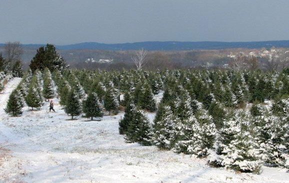 jones christmas tree farm street md