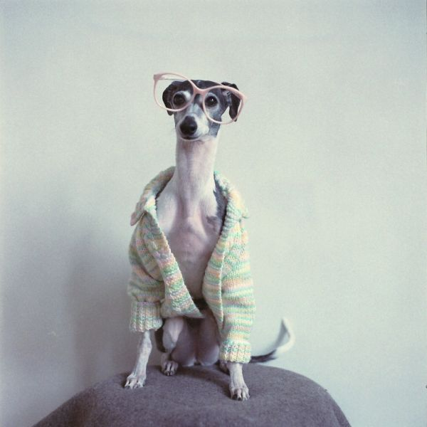 Doggie, Hipster, Puppies, Marble, Glasses, Whippets, Animal, Dogs Clothing, Italian Greyhounds