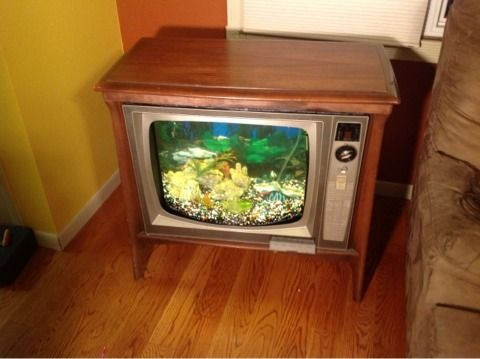 23 best the tv aquarium images on pinterest for Gumball fish tank