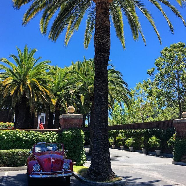 Vintage vibes in Silicon Valley. 🚗 ✌🏽🌈❤️#volkswagenbeetle #beetle #car #vintage #palmtrees #california #stanford #instagood #love #vibes #californiadreamin #californialove #paloalto #montereylocals #pacificgrovelocals- posted by Ashley Hogue https://www.instagram.com/ashlova. See more of Pacific Grove, CA at http://pacificgrovelocals.com