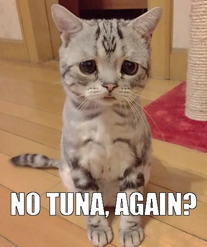 the sad cat meme……HE WAS OFFERED AN ARTICHOKE - THUS THE SAD LOOK(!!)……..ccp
