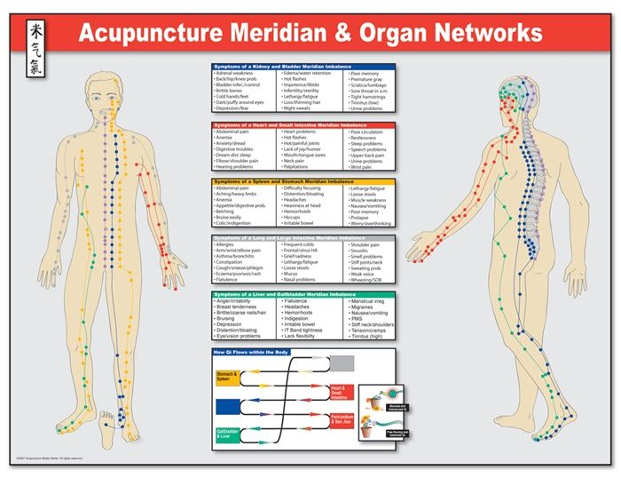 Meridian Pathways And Organ Networks Poster Acupuncture
