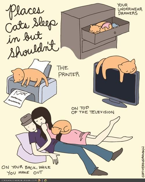 Cats sleep in places they shouldn't