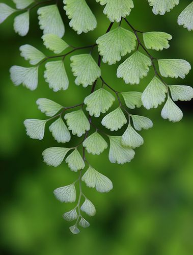 Patterns in nature ~ delicate fronds, but ferns are able to grow in cracks in walls, and conditions which are challenging.