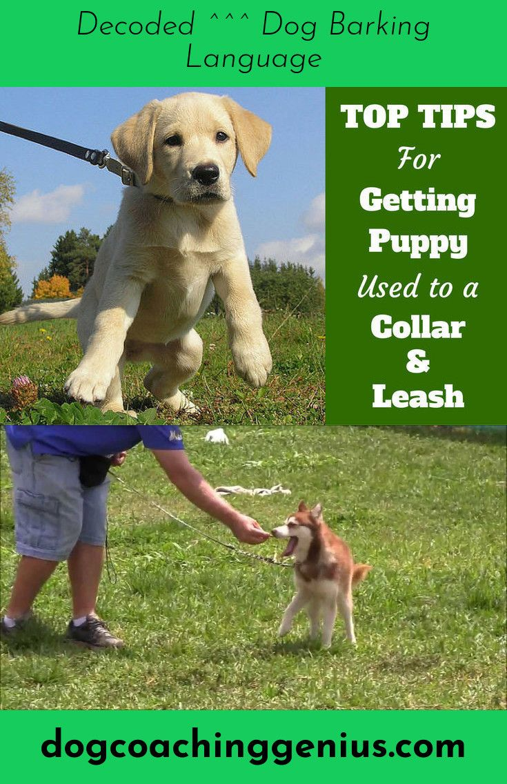 Read Information On Stop Dog Jumping Dogs Golden Retriever