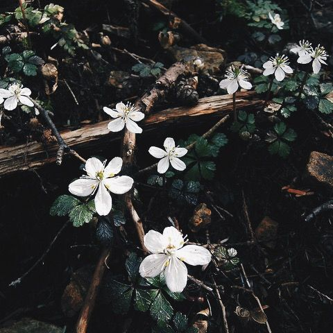 spring aesthetic