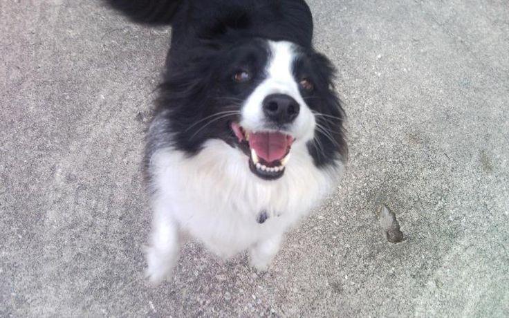 Jacksonville Dog Boarding Jacksonville FL Pet Boarding Dog Day Care Sitting - Pricing