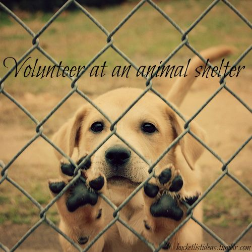 Bucket List: Volunteer at an animal shelter.  I've already volunteered for the Red Cross, so one done.