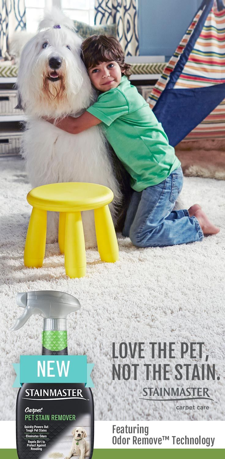 part of loving your dog means loving his messes fortunately you donu0027t need to love those messes for long new stainmaster carpet pet stain remover gets - Stainmaster Carpet