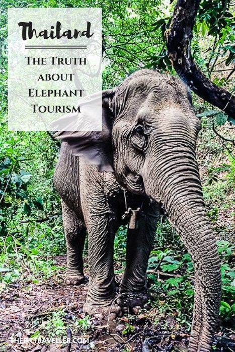 The Truth about Elephant Tourism in Thailand. Expert Dr Megan English explains the truth about elephant tourism in Thailand, explaining the most ethical approach to supporting the conservation effort.