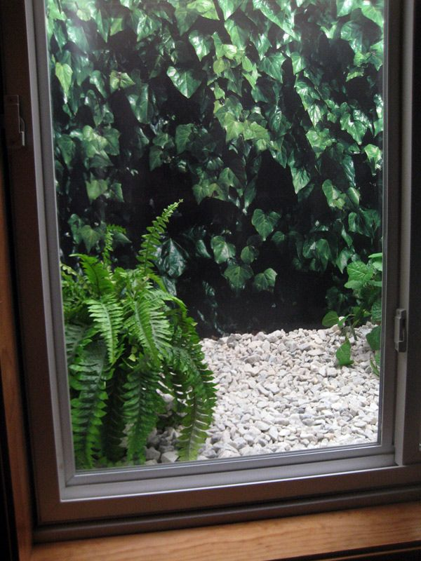 "Do you have a steel basement window well with no view? Spruce it up with a window well picture! I love my ""green"" window view."