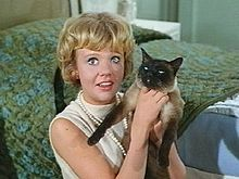 """That Darn Cat with Hayley Mills. Each of the Seal Point Siamese cats who collectively play the role of DC are so-called """"traditional"""" or """"old style"""" Siamese, as opposed to the more dainty, long and tubular modern Siamese show cats. One of the cats used for the movie belonged to a longtime cat breeder Edith Williams, a member of the Stud Book Fanciers Association. One of the feline actors also starred, along with two dogs, in Disney's 1963 film The Incredible Journey."""