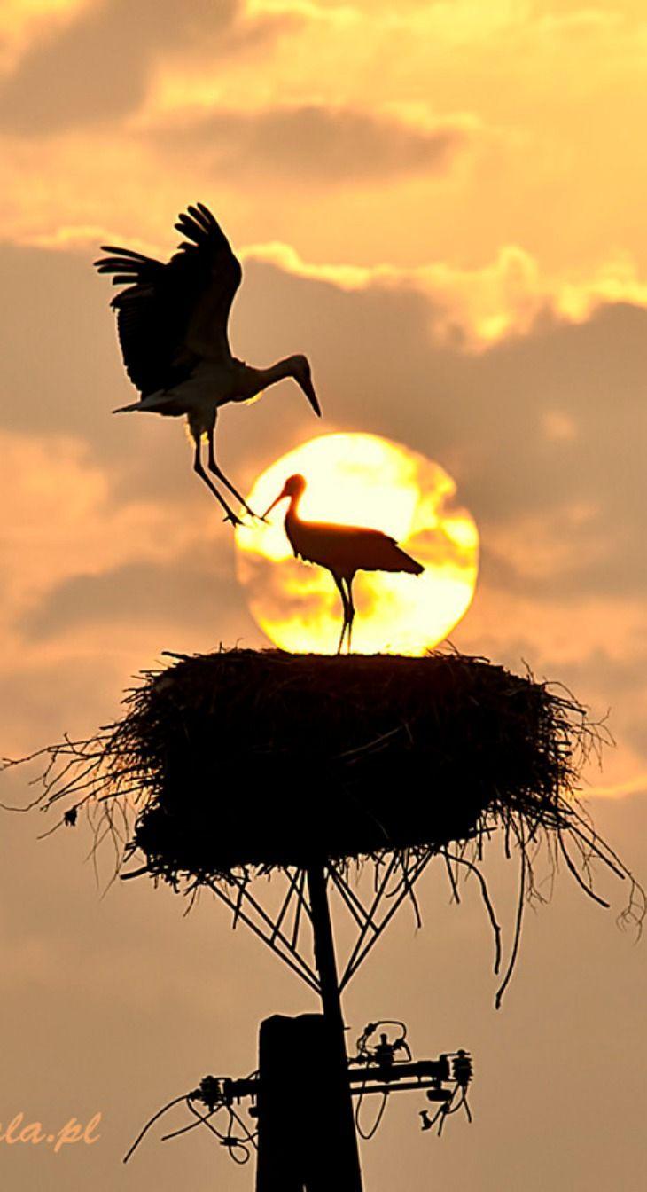 Polish Storks
