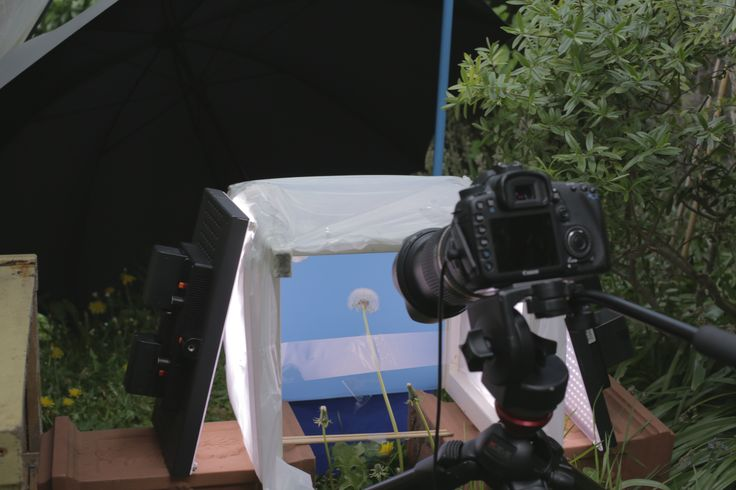 Shoots both in the studio and in the garden, here with wind cheaters and continuous lighting.