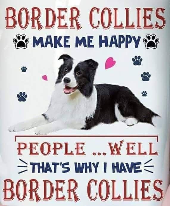 Pin By Margie Stetz On Border Collie Mom Border Collie Border