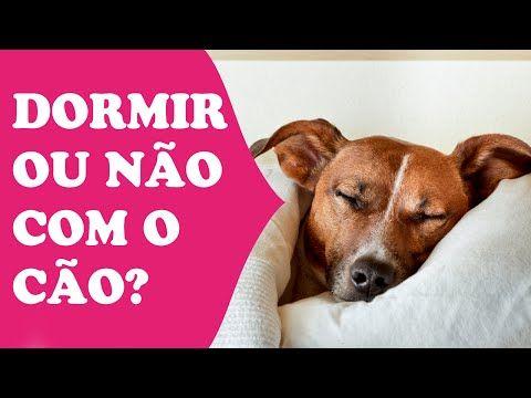 tudosobrecachorros.com.br razoes-pra-deixar-o-cachorro-dormir-na-sua-cama
