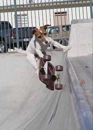 Good job !/イケてるだろ?【ジャック・ラッセル・テリア】|おじゃかんばん『ワンちゃんだらけ 犬の写真日記』