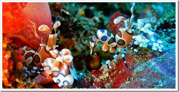 MELHORES-pontos-Mergulho-Tailandia-Similan-Ilhas