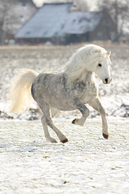 Beautiful Pony. #horse #equine http://globalhorsecents.com