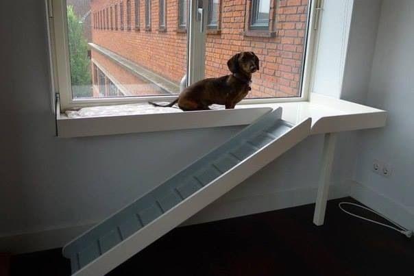 M s de 25 ideas incre bles sobre rampa para perros en - Escaleras para perros pequenos ...