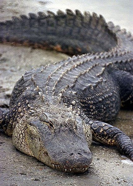 Florida's Wildlife: Reptiles...can't wait to visit home!