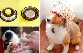 11 astuces que les propriétaires de chien devraient connaître noté 3.25 - 4 votes 6) Ses yeux et oreilles sont sensibles ? Protégez-les lors du bain avec un bonnet de bain. Il suffit de rabattre le bonnet au niveau des yeux lors du rinçage. 7) Les accidents arrivent même pour un chien bien éduqué. Pour...